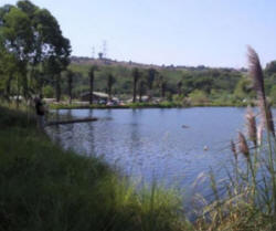 Freshwater fishing areas in gauteng the edenvale quarry for Quarry lakes fishing