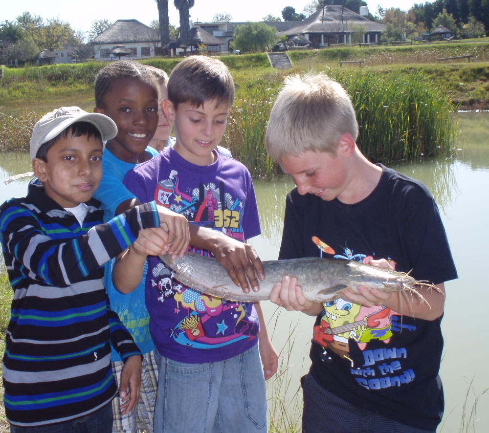 Freshwater fish in south africa - Freshwater Fish In South Africa