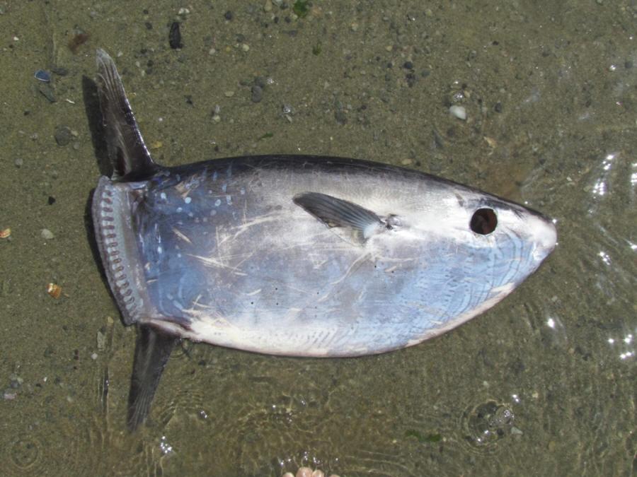 виды паразитов в организме рыбы