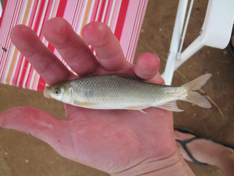 Vaal Dam Carp Fishing