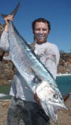 Couta (King Mackerel)