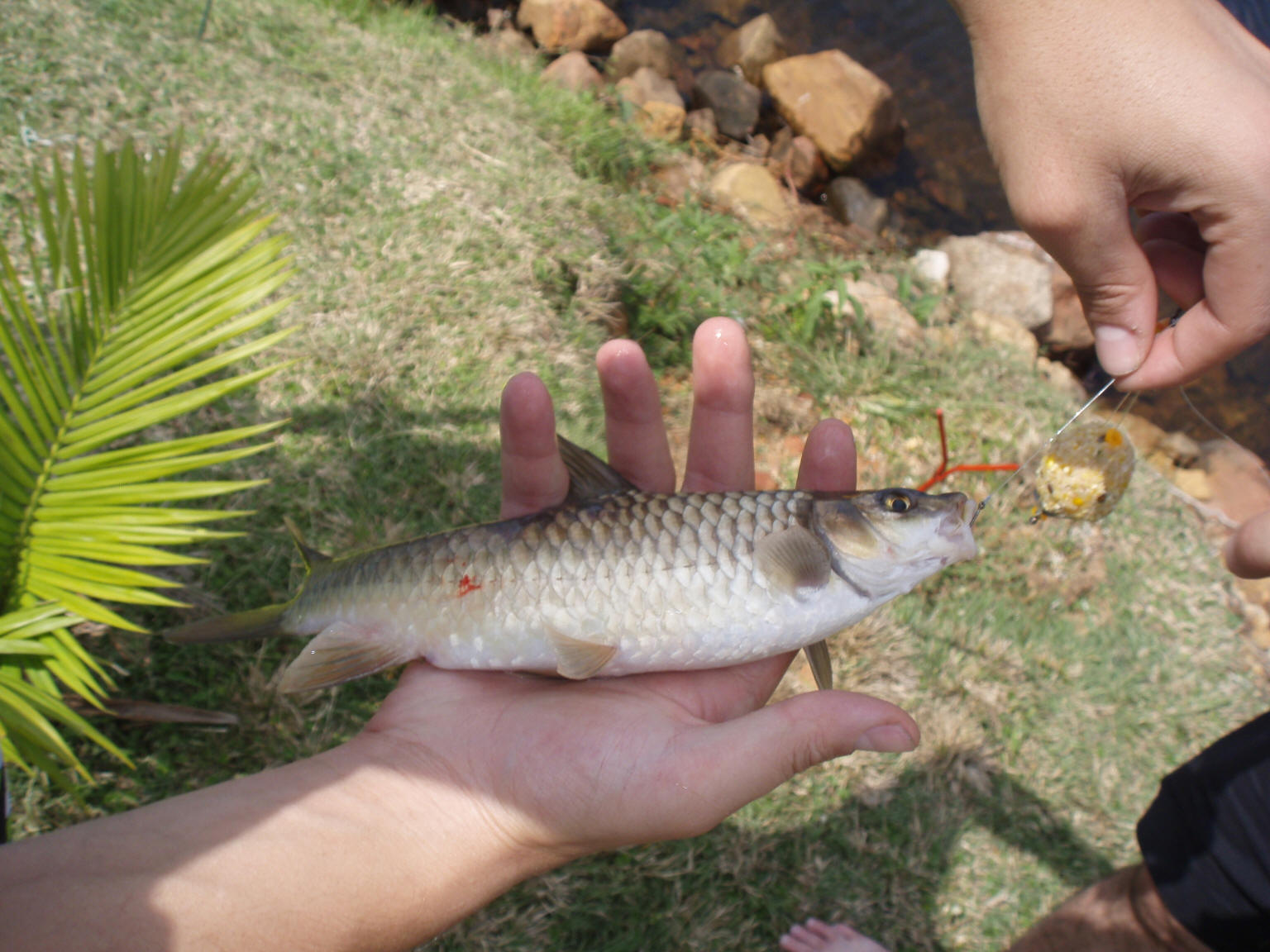 loskop dam fishing & angling information & tips, Fishing Bait
