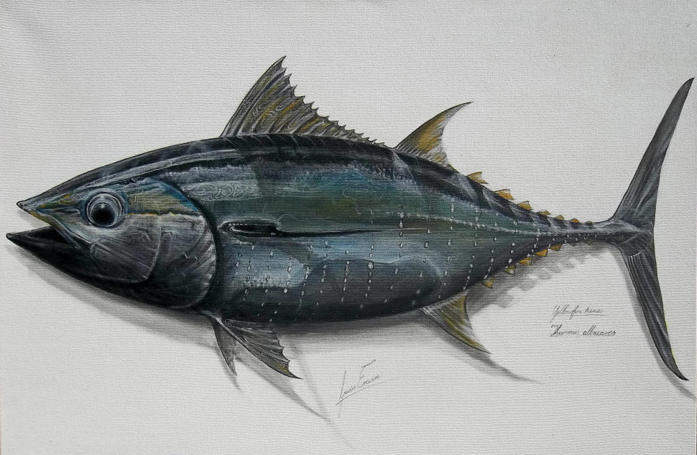tuna fishing with the walrus essay The seven species of tunas in the genus thunnus are the northern bluefin tuna (t thynnus), albacore (t alalunga), yellowfin tuna (t albacares), southern bluefin tuna (t thynnus maccoyii), bigeye tuna (t obesus), blackfin tuna (t atlanticus), and longtail tuna (t tonggol) these different species range from moderate to very large in size.