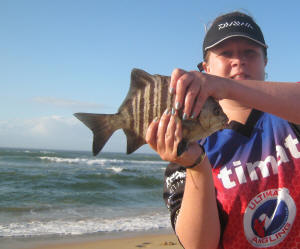 Banded Galjoen caught at riet reef on high tide