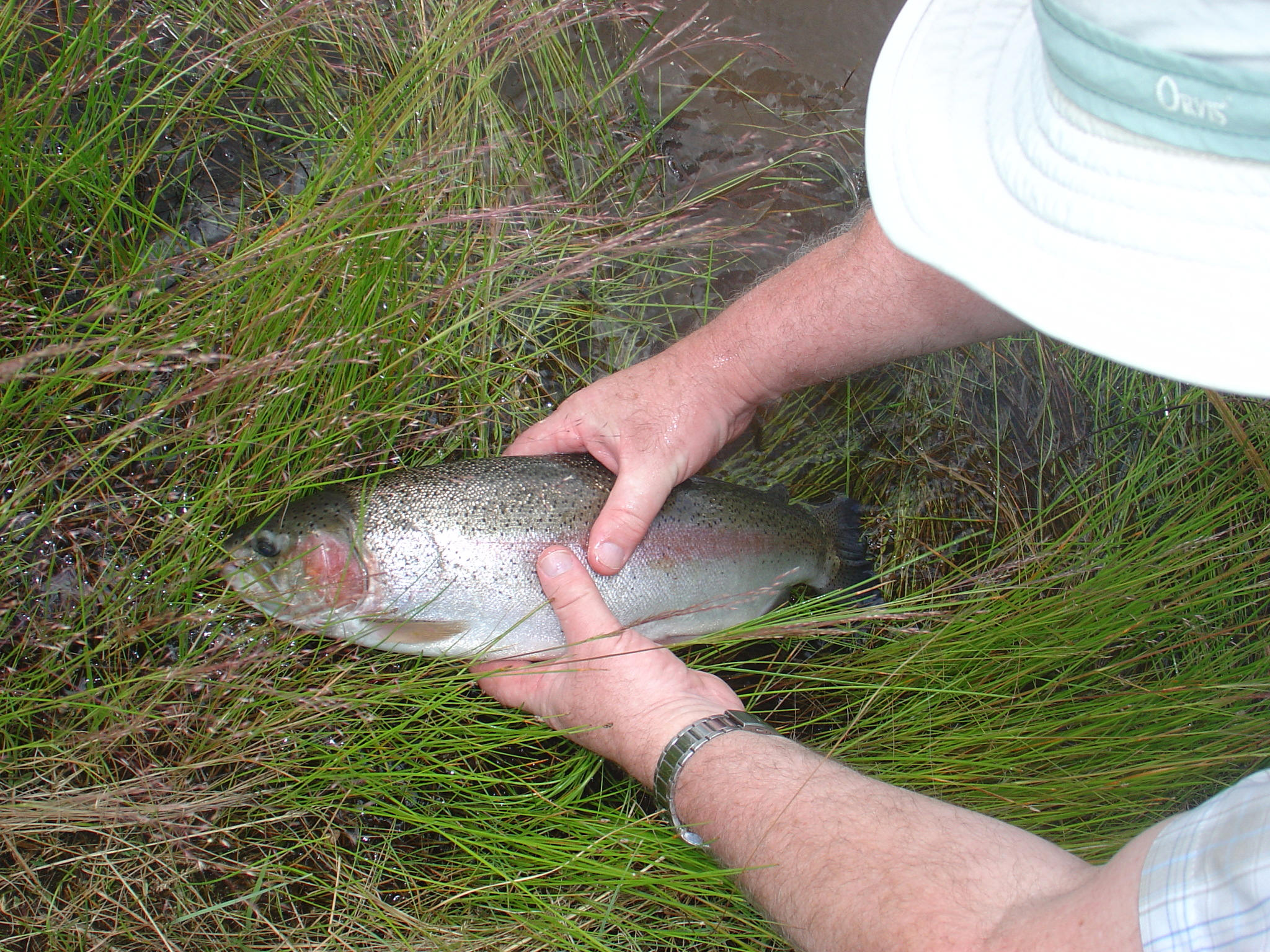 South african freshwater fish information and interesting for Freshwater fish facts