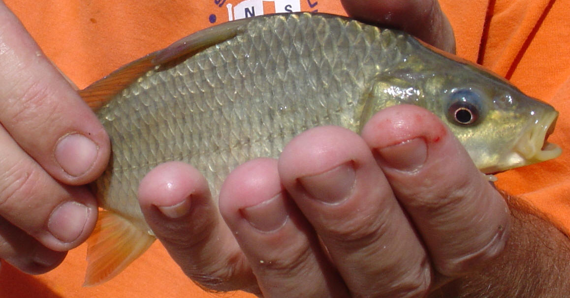 South african freshwater angling fish species list for African freshwater fish