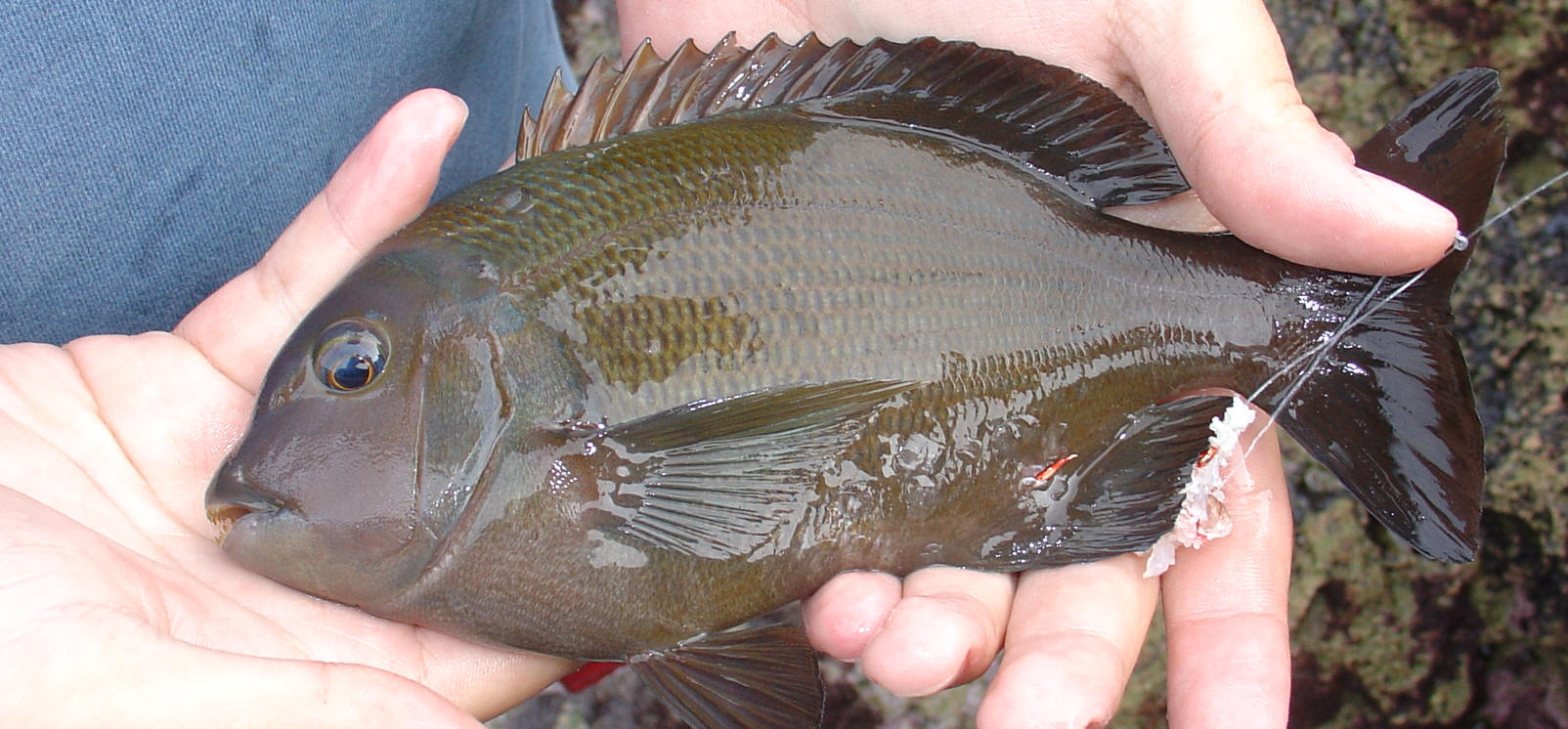 Freshwater fish of southern africa - Freshwater Fish Of Southern Africa