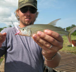 Fly fishing for tigerfish in lake jozini