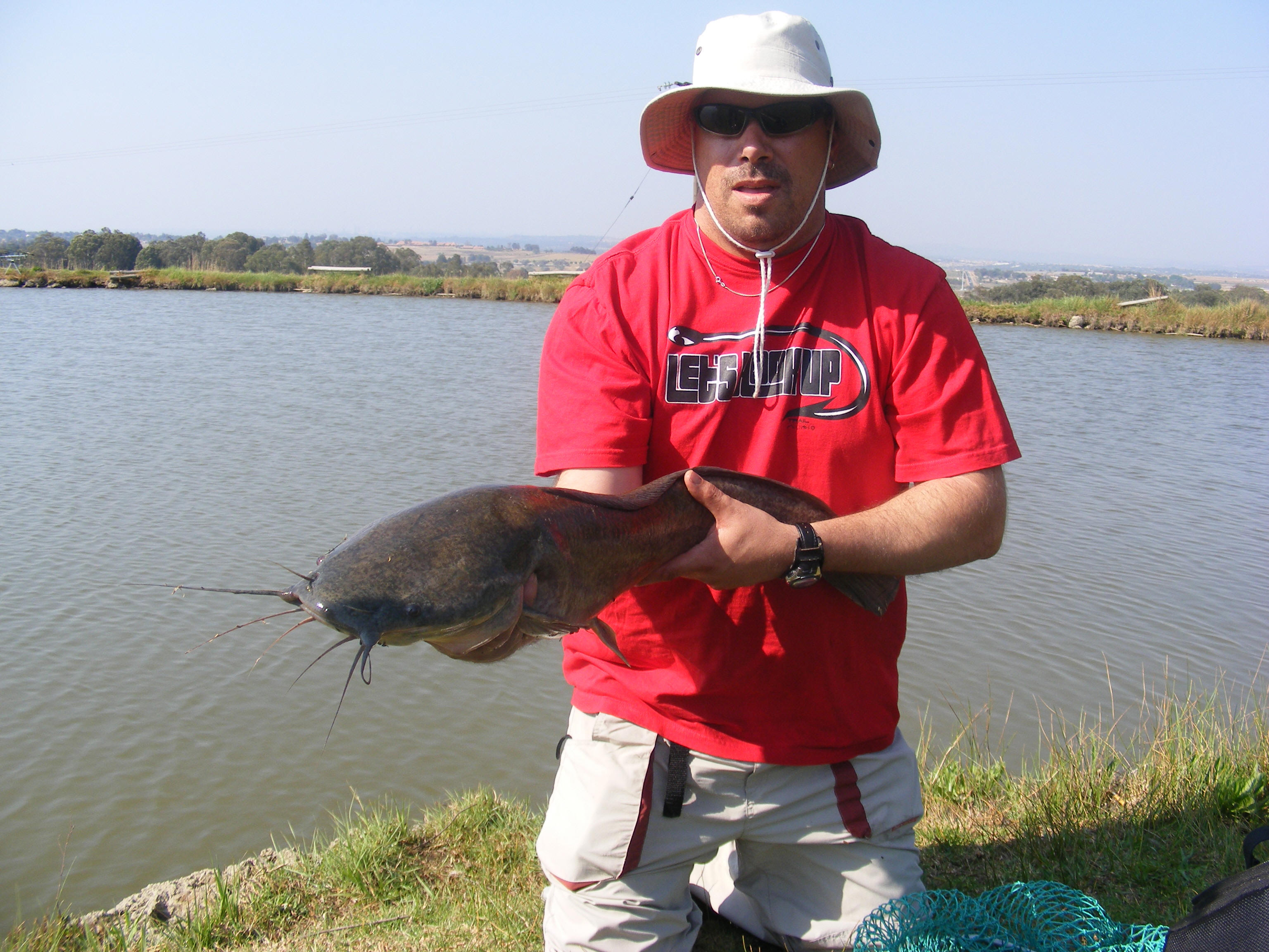African catfish pictures - photo#22
