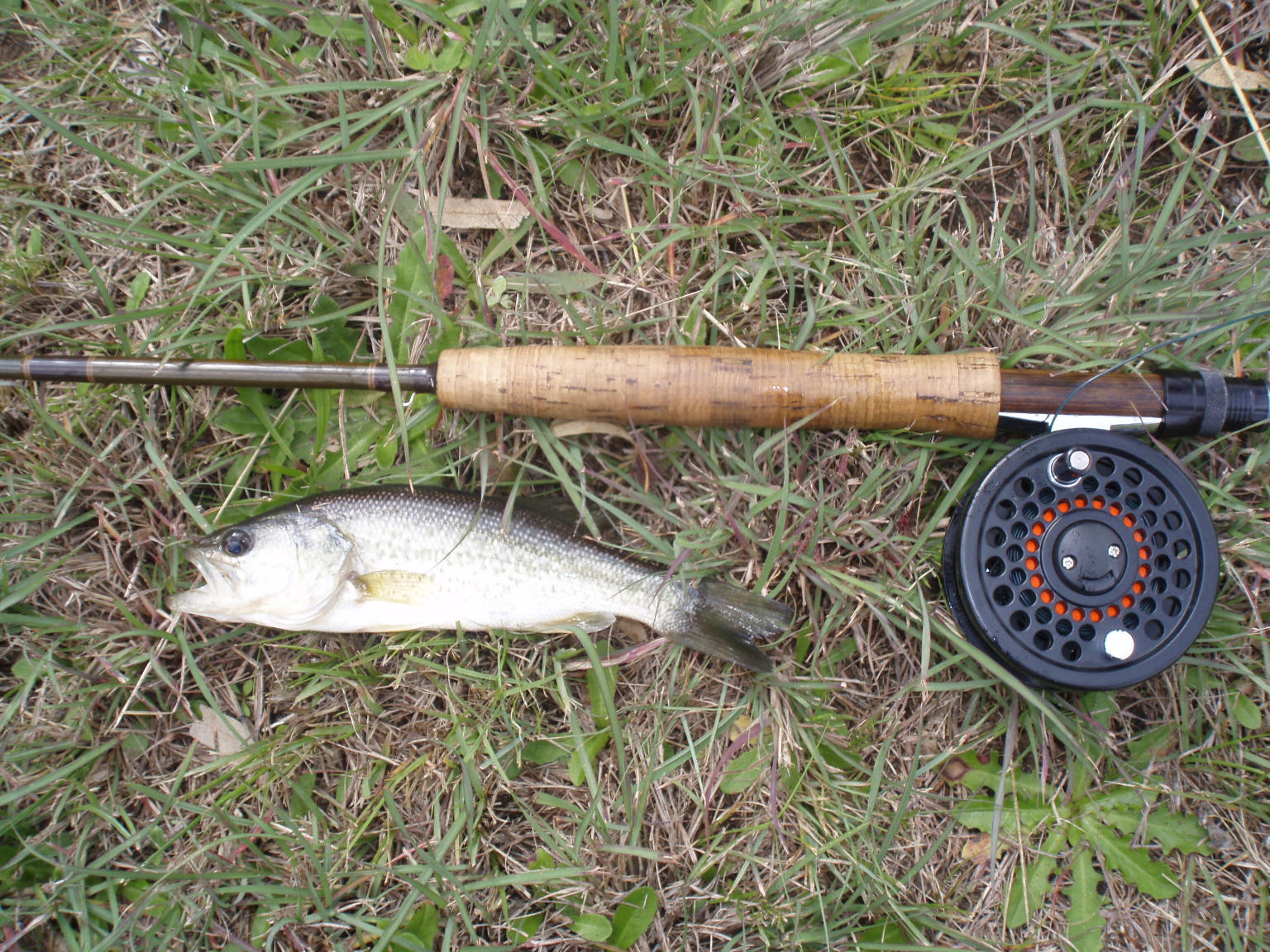 South african largemouth bass pictures photographs for Bass fly fishing